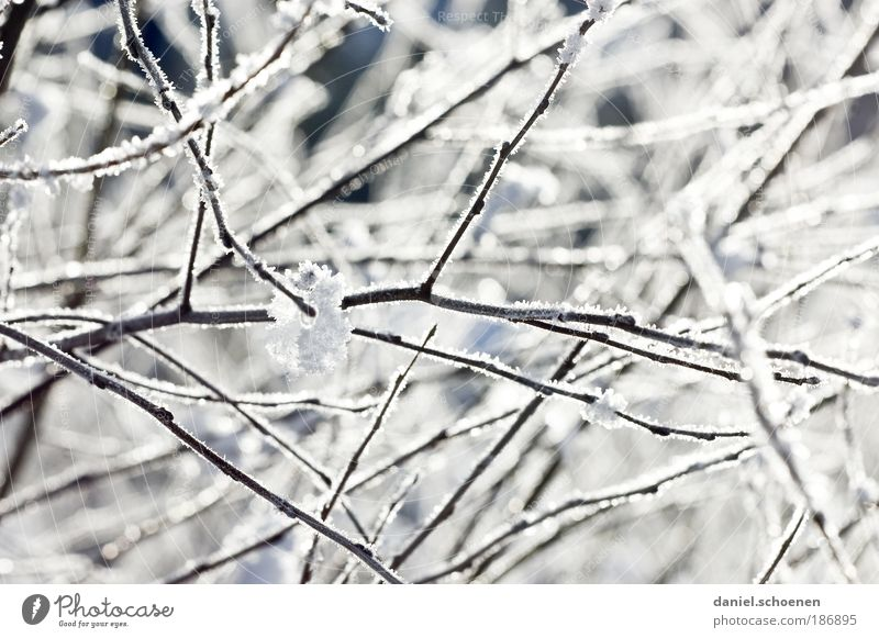 White Winter Cold Snow Ice Bright Weather Frost Bushes Climate Branch