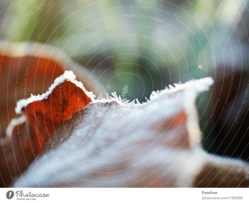 Autumn vs Winter Environment Nature Plant Water Sunlight Climate Weather Beautiful weather Ice Frost Tree Grass Leaf Park Cool (slang) Bright Cold Brown Green