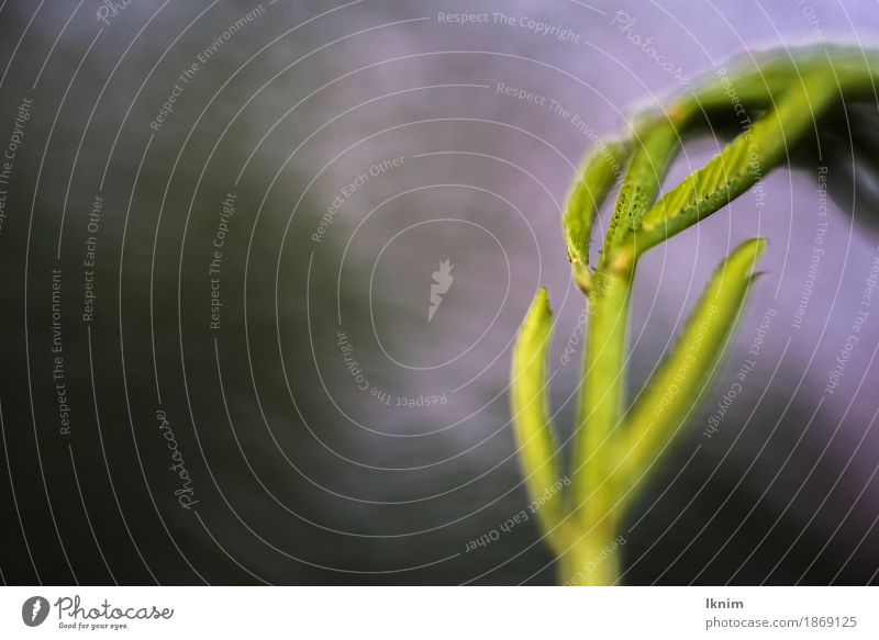 Macro shot of a blade of grass Environment Nature Plant Grass Foliage plant Wild plant Meadow Green Copy Space Background picture Macro (Extreme close-up)