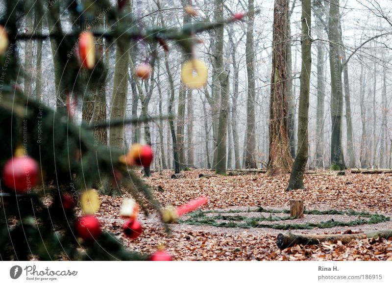 Nature Christmas & Advent Green Red Winter Joy Loneliness Forest Cold Landscape Emotions Happy Together Kindergarten Fog Authentic