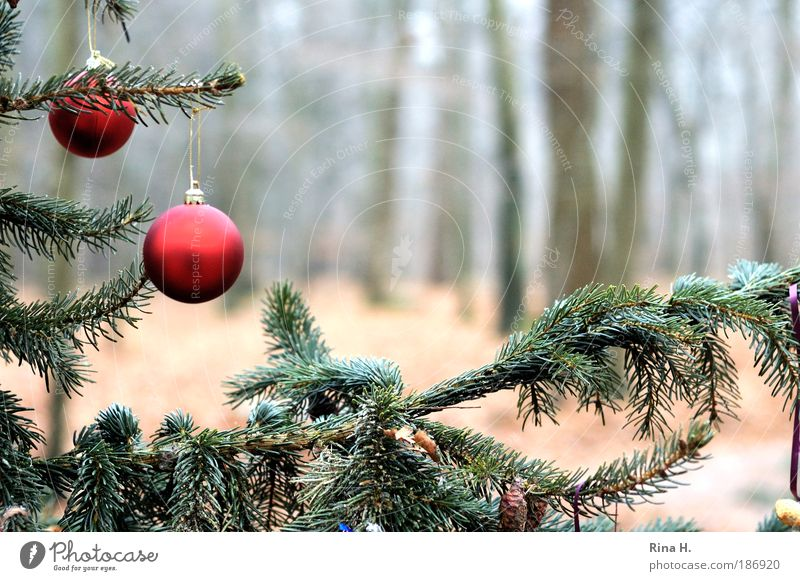 Nature Christmas & Advent Green Red Loneliness Forest Emotions Happy Exceptional Contentment Simple Joie de vivre (Vitality) Belief Tree trunk Christmas tree