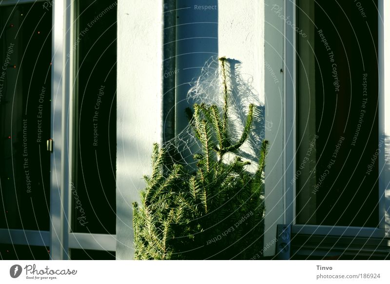 Christmas & Advent Tree Winter House (Residential Structure) Window Door Christmas tree Net Living or residing Beautiful weather Anticipation Foliage plant Coniferous trees Detached house