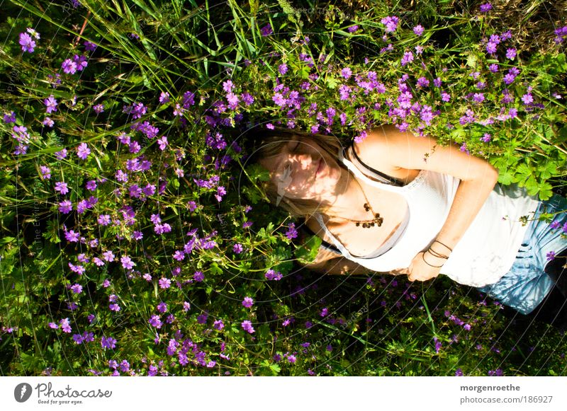 If it were summer now. Trip Summer Young woman Youth (Young adults) Arm 1 Human being 18 - 30 years Adults Nature Plant Flower Grass Meadow Touch Fragrance Lie