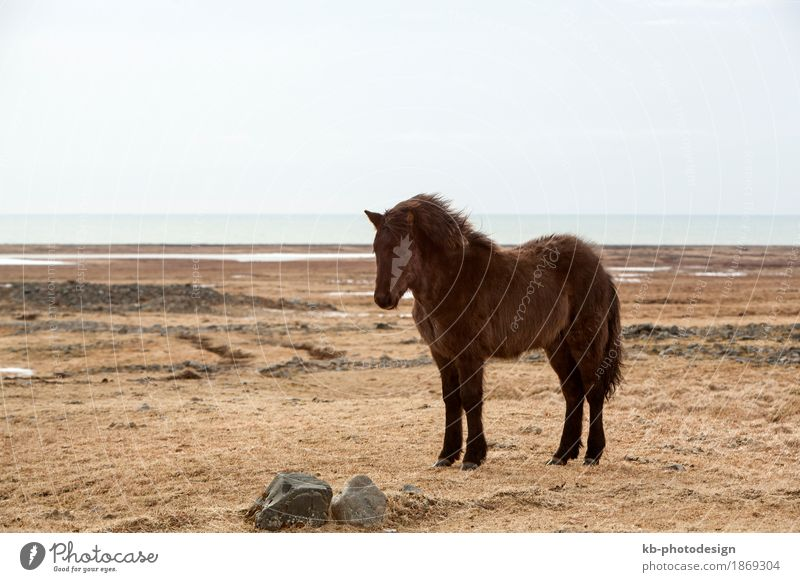Vacation & Travel Animal Far-off places Winter Tourism Wild animal Adventure Horse Iceland