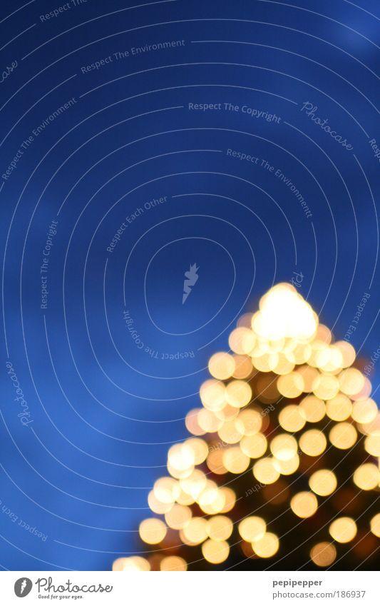 Christmas & Advent Sky Tree Blue Winter Glittering Plant Gold Night sky Warm-heartedness