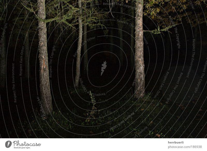 Nature Green Tree Black Forest Dark Death Environment Wood Dream Moody Brown Wait Crazy Grief Threat