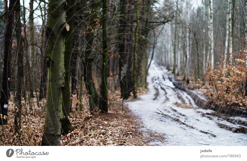 Nature White Tree Plant Winter Leaf Forest Cold Snow Lanes & trails Landscape Ice Going Environment Earth Gloomy