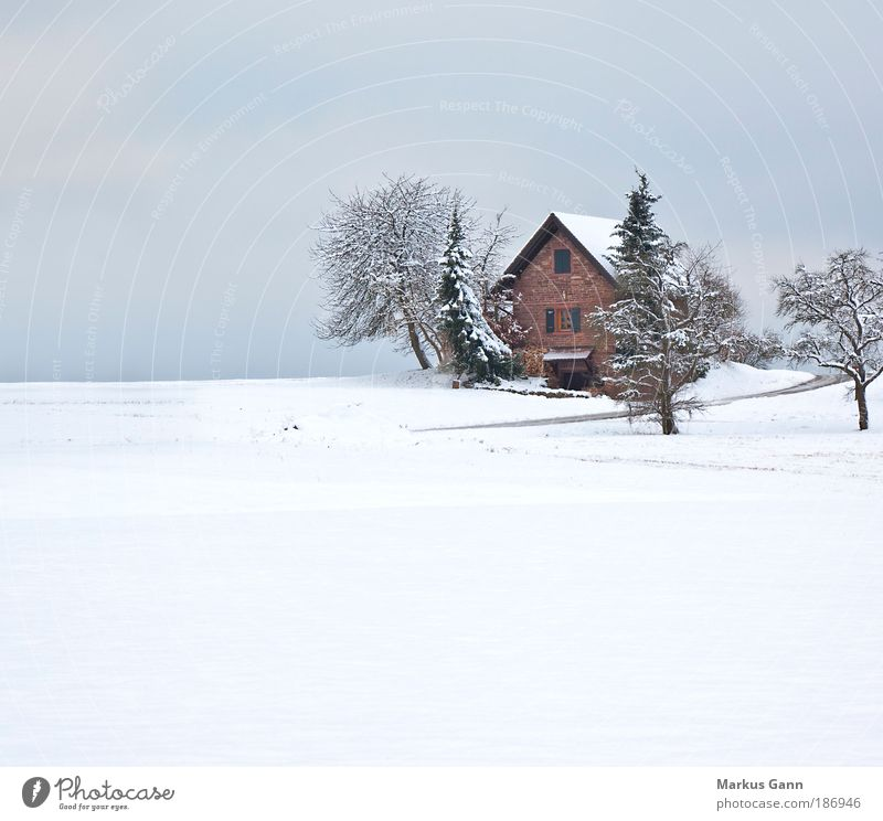 Refuge in white Relaxation Calm Vacation & Travel Winter Snow Winter vacation Flat (apartment) House (Residential Structure) Nature Landscape Tree Field
