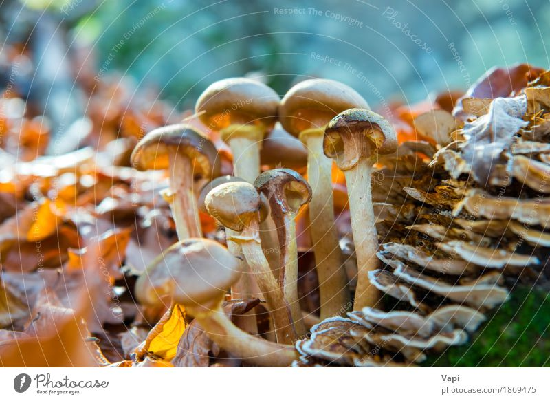 Group of mushrooms Vegetable Organic produce Vegetarian diet Diet Nature Plant Sunlight Autumn Grass Moss Leaf Park Forest Growth Fresh Delicious Natural Wild