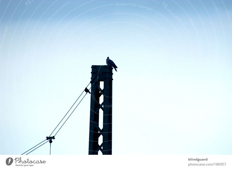 Sky Blue White Animal Black Above Metal Bird Sit Railroad Energy industry Electricity Cable Logistics Under Hang
