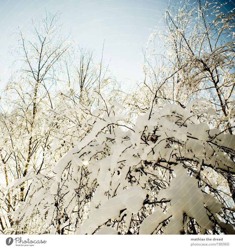 winter magic Environment Landscape Plant Sky Winter Beautiful weather Ice Frost Snow Tree Bushes Park Forest Cold Idyll Covered Snowflake Branch White Calm