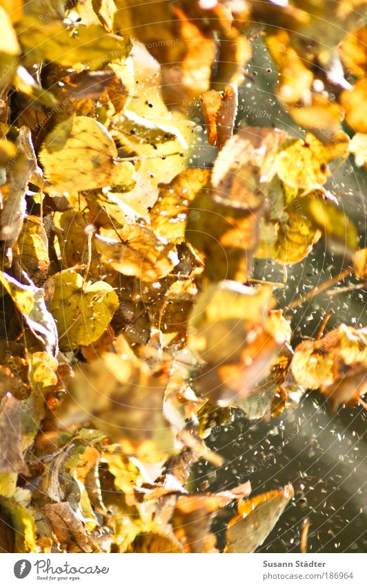 flyers Autumn Plant Tree Leaf Park Meadow Blossoming To fall Flying Playing Blonde Brown Yellow Gold Freedom Aviation Dirty Whirlwind Nature Colour photo Detail