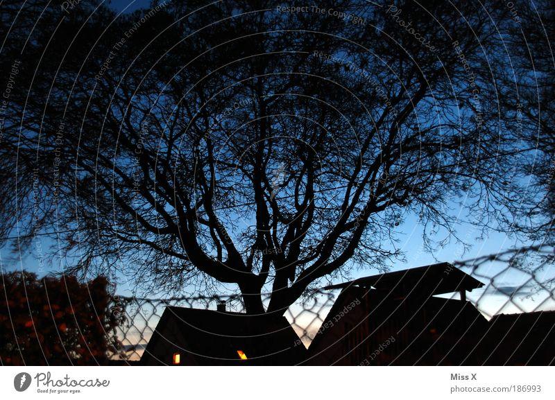 Blue hour Garden Night sky Tree Park House (Residential Structure) Detached house Illuminate Gigantic Fence Colour photo Exterior shot Deserted Evening Twilight