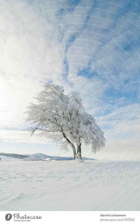 Sky White Tree Sun Blue Winter Far-off places Snow Ice Frost Beautiful weather Copy Space Black Forest