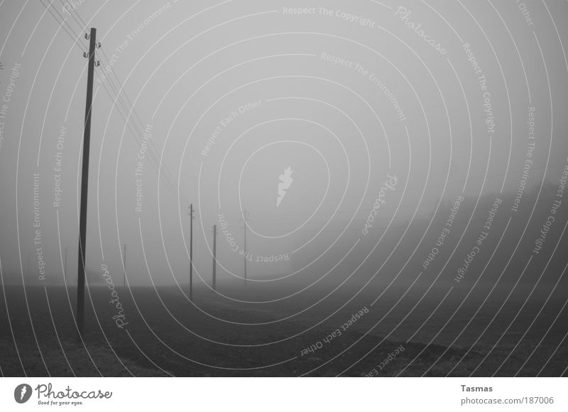 Calm Forest Autumn Gray Landscape Field Fog Electricity Serene Boredom Caution Black & white photo High voltage power line