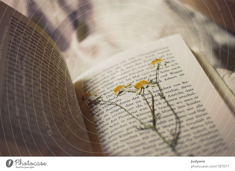 Nature Old Beautiful Flower Calm Yellow Relaxation Blossom Happy Dream Media Book Hope Romance Letters (alphabet) Pure
