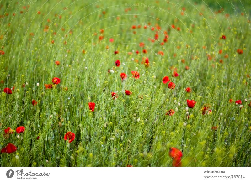 Free Land Nature Plant Spring Beautiful weather Field Emotions Joy Optimism Determination Warm-heartedness Romance Desire Hope Longing Loneliness Relaxation