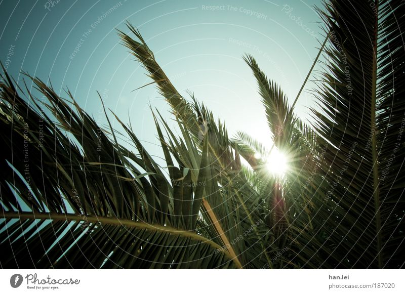 Summer! Copy Space bottom Copy Space top Deserted Colour photo Sunlight Back-light Sky Beautiful weather Sunbeam Plant Palm tree Leaf Vignetting Summer vacation