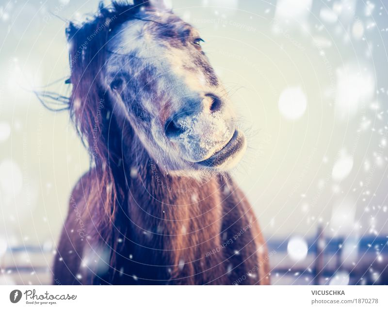 Horse enjoys winter and snow Lifestyle Joy Winter Snow Nature Sky Beautiful weather Animal 1 Design Frost Grinning Humor Portrait photograph Smiling