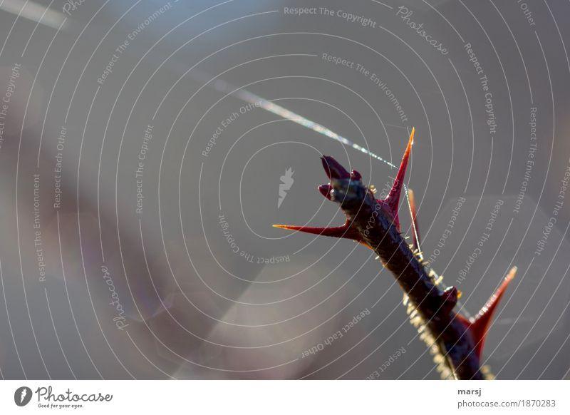 Nature Illuminate Elegant Point Branch Thin Ease Fine Connectedness Thorn Cobwebby