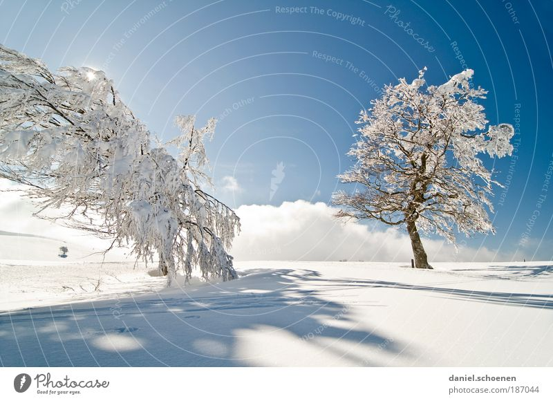Nice and cold!!! Vacation & Travel Tourism Trip Winter Snow Winter vacation Sky Cloudless sky Sun Climate Beautiful weather Ice Frost Tree Bright Blue White