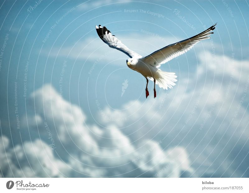 190 flying hours Environment Nature Elements Air Drops of water Clouds Autumn Climate Weather Wind Coast North Sea Animal Wild animal Bird Animal face Wing