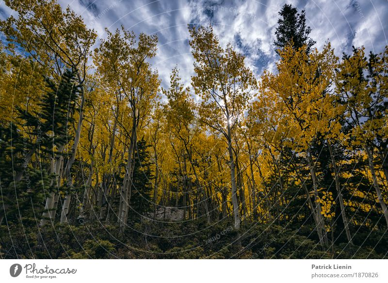 Aspen in Fall Beautiful Vacation & Travel Tourism Trip Adventure Freedom Mountain Hiking Environment Nature Landscape Elements Earth Sky Clouds Autumn Climate