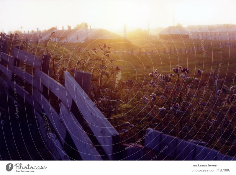 Solovki Nature Landscape Summer Grass Bushes Meadow Field Island Solowezki Islands Modest Longing Homesickness Calm Fence House (Residential Structure) Horizon