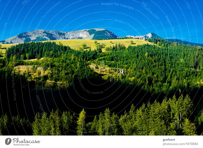 Alpine landscape with mountains and forests in Austria Landscape Mountain Alps Forest Vantage point Loneliness preservation Relaxation Rock Forestry Sky Tall