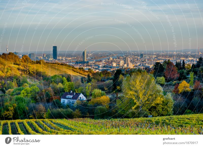 Vineyard in autumn in front of the skyline of Vienna in Austria Landscape Skyline Town Agriculture Autumn Vantage point Tree Mountain Leaf City Harvest