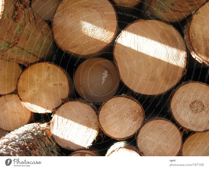 woody Tree Spruce Work and employment Round Brown Arrangement Stack Wood Stack of wood Colour photo Exterior shot Deserted Day Light Shadow Sunlight Sunbeam