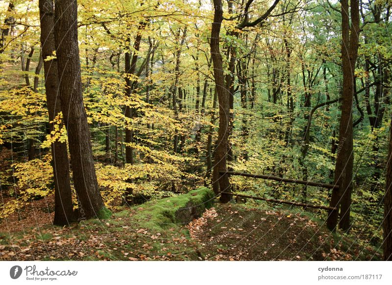 Nature Beautiful Tree Calm Leaf Forest Life Relaxation Autumn Movement Freedom Dream Landscape Wind Environment Time