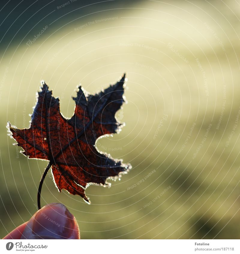 I'll show you Human being Fingers Environment Nature Plant Elements Water Autumn Winter Climate Weather Beautiful weather Ice Frost Grass Leaf Park Meadow