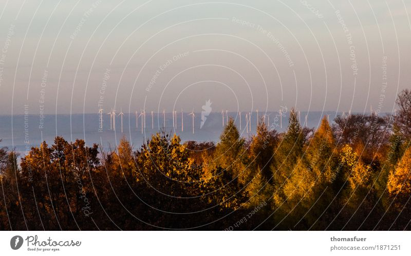Wind turbines, forest sky Advancement Future Energy industry Renewable energy Wind energy plant Environment Nature Landscape Cloudless sky Sunrise Sunset Autumn