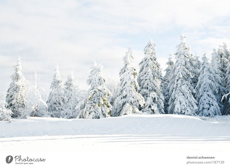 Nature White Tree Winter Cold Snow Ice Weather Environment Frost Light Climate Fir tree Beautiful weather Climate change Black Forest