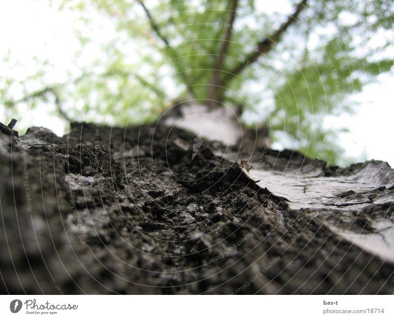 Tree Street Lanes & trails Tree trunk Tree bark Ant Column of ants