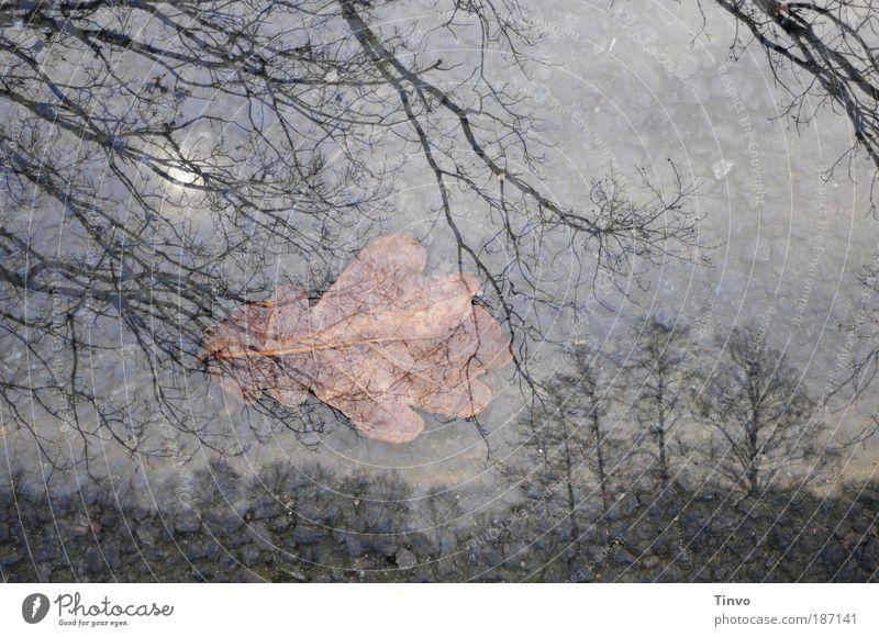 Nature Sky Tree Sun Winter Calm Leaf Loneliness Dark Autumn Emotions Sadness Landscape Earth Grief Change