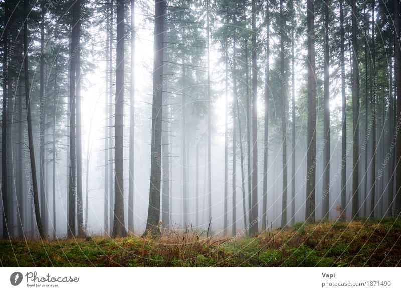 Mysterious fog in the green forest Tourism Environment Nature Landscape Sunlight Summer Autumn Weather Fog Rain Tree Grass Leaf Forest Dark Blue Brown Yellow