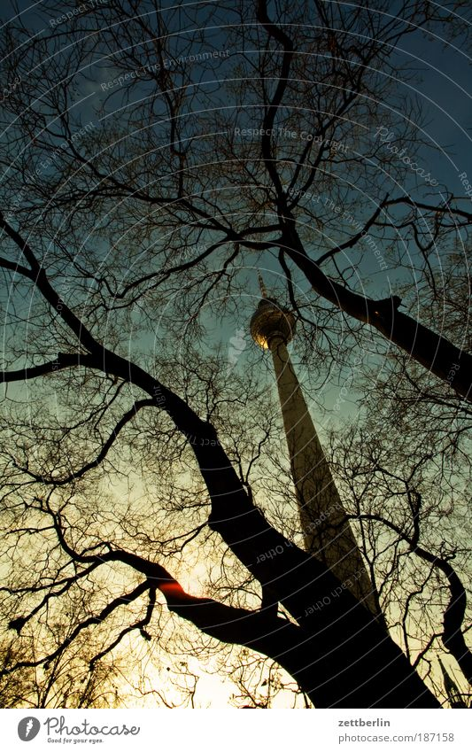 Sky Tree Winter Clouds Autumn Berlin Architecture Tower Branch Manmade structures Tree trunk Landmark Twig Capital city Berlin TV Tower