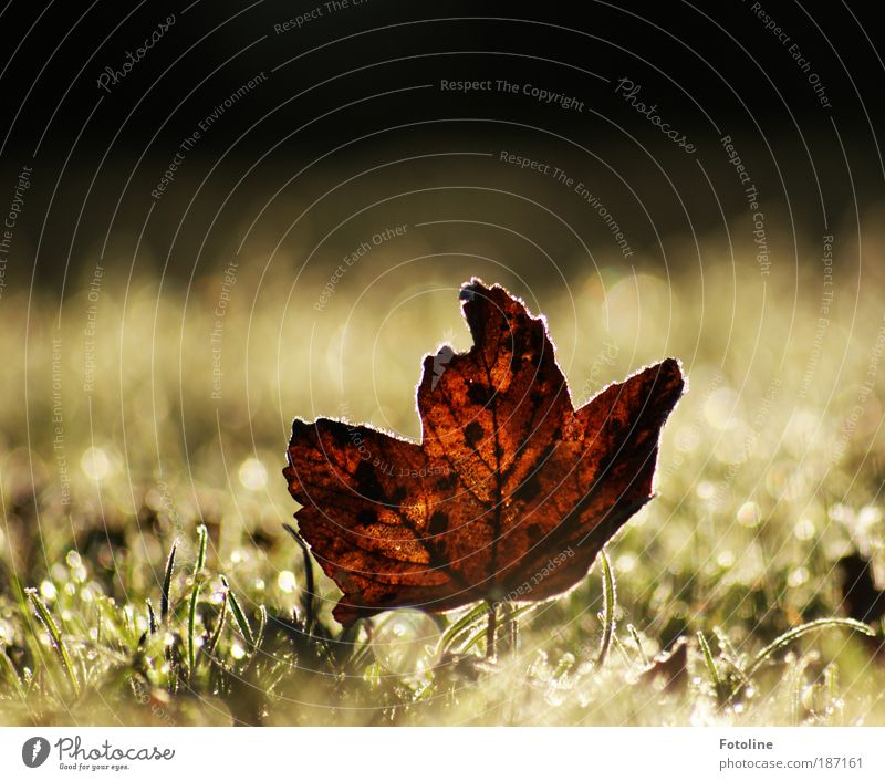 Bye autumn, hello winter! Environment Nature Plant Elements Water Sunlight Autumn Winter Climate Weather Beautiful weather Ice Frost Tree Grass Leaf Park Meadow