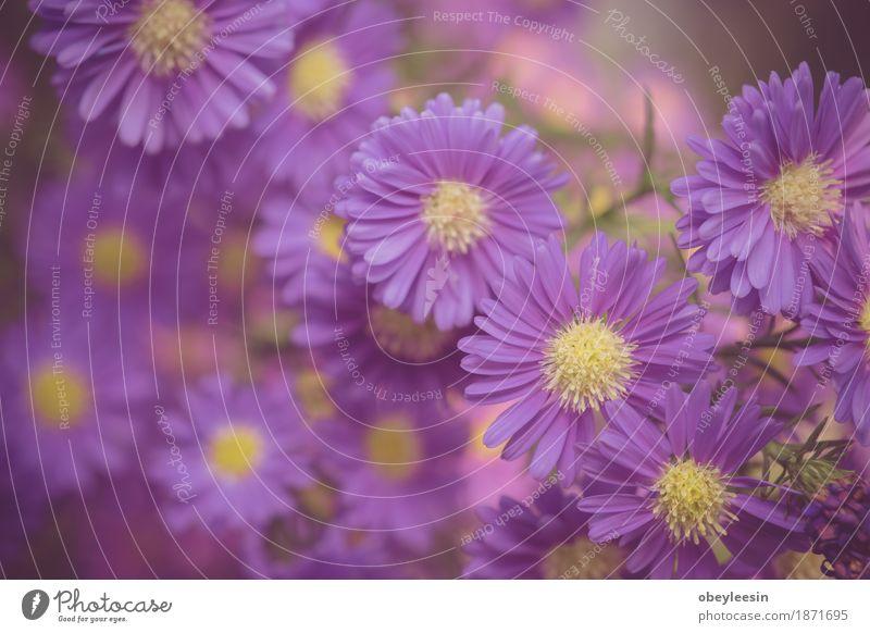 Beautiful pink flowers growing, selective focus Nature Plant Tree Flower Lifestyle Style Art Design Adventure Artist