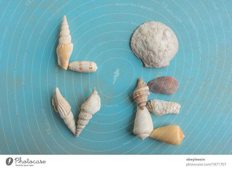 Flat lay of shells on a blue wooden background, love Nature Joy Lifestyle Style Art Design Adventure Artist Work of art