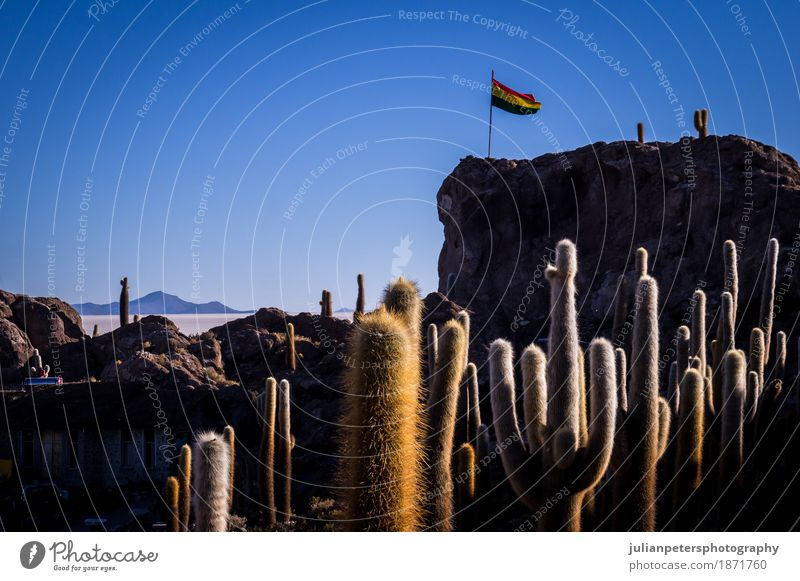 Bolivian flag at Incahuasi cactus island Uyuni Dessert Vacation & Travel Sun Island Nature Landscape Plant Sky Cactus Hill Lake Flag Wild Blue Yellow Colour