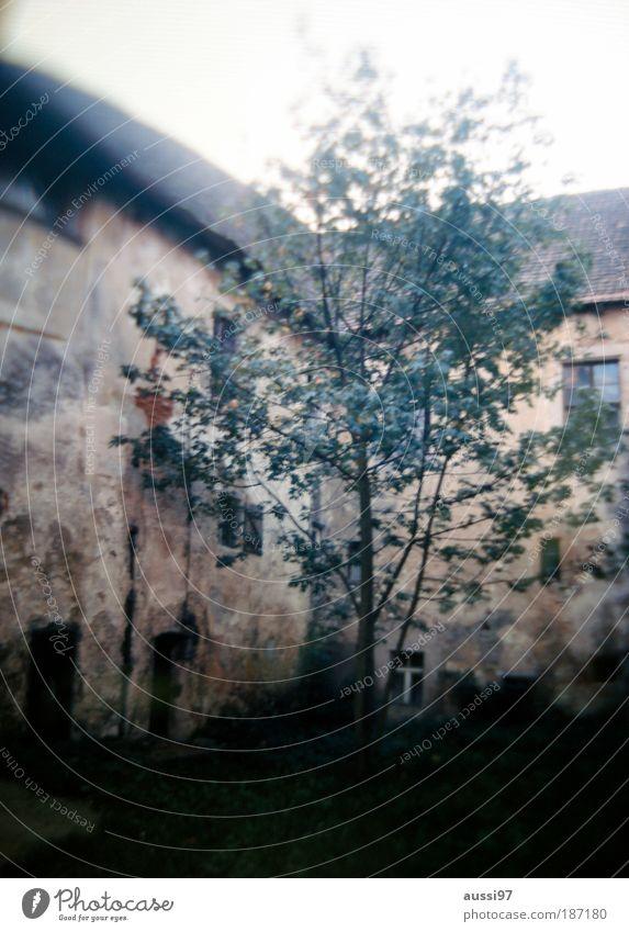 liquidation Tree Backyard Back-light hazy solvent dream