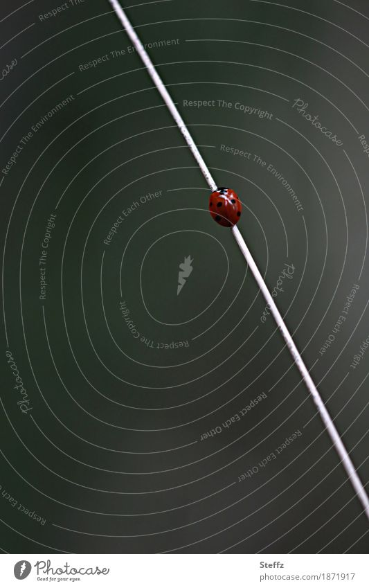 upwards! Nature Summer Grass Blade of grass Beetle Ladybird Small Gray Red Movement Symmetry Target Upward Good luck charm Go up Aspire Career Geek Forwards