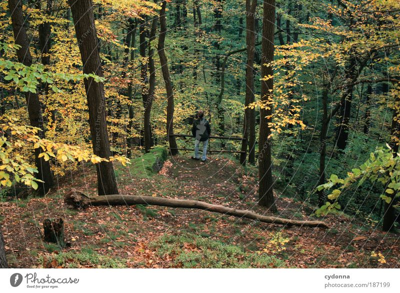 A little man stands in the forest ... Life Harmonious Relaxation Calm Human being Man Adults Environment Nature Landscape Autumn Tree Forest Movement Uniqueness