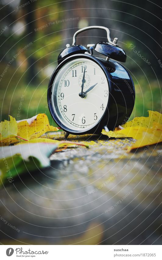 time for hibernation Clock Alarm clock Time Bell Wake Sleep Oversleep Arise set clock wake-up call Digits and numbers Clock face Autumn Exterior shot Nature