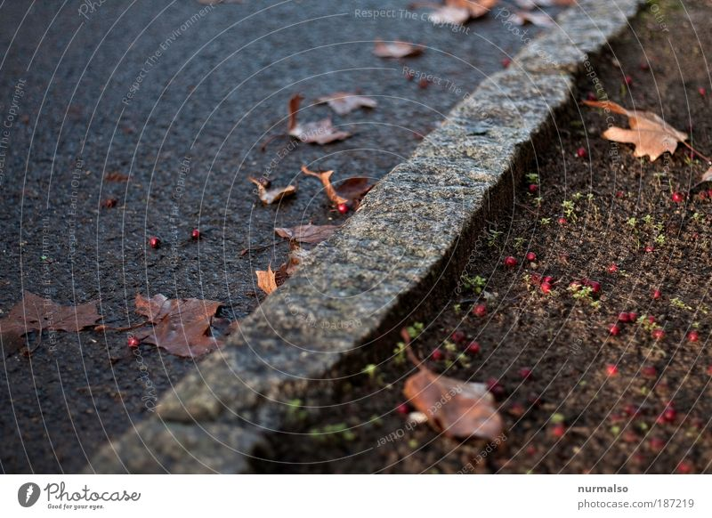 Tree Leaf Autumn Street Movement Stone Park Places Lie Transport Stand Monument Bus Motorcycle Sharp-edged Marketplace