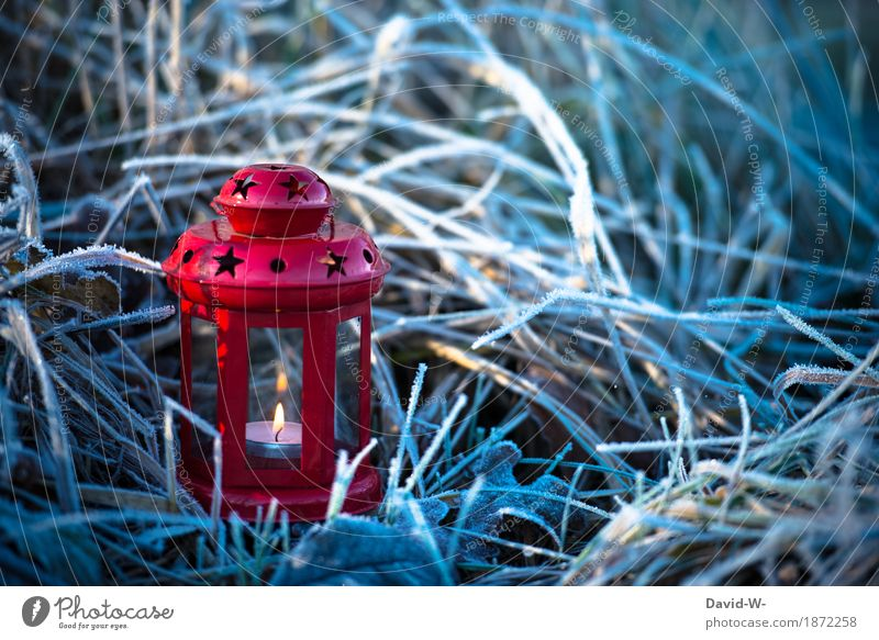 chill Christmas & Advent Art Environment Nature Landscape Fire Winter Climate Climate change Beautiful weather Snow Plant Grass Bushes Meadow Field Illuminate