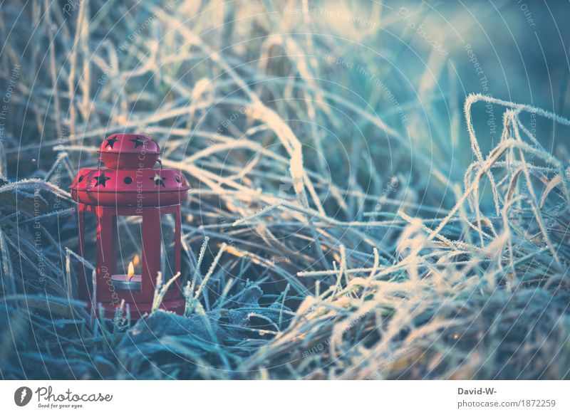 small red lantern Christmas & Advent Art Work of art Environment Nature Landscape Winter Beautiful weather Bad weather Ice Frost Snow Plant Grass Bushes